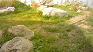 Snow leopard - Meadow cam